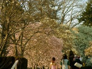 Brooklyn Botanical Garden © Oda Cordes